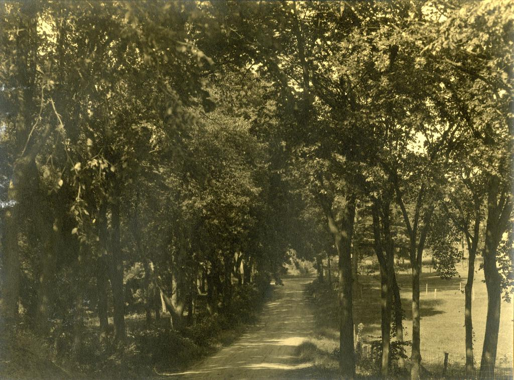 Arbor Lodge gardens and surrounding landscape, unpaved road lined with trees