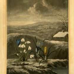 Crocuses & snowdrops