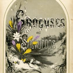 Cornelian Cherry Dogwood, Cornus mas: Dogwood Family (Cornaceae)