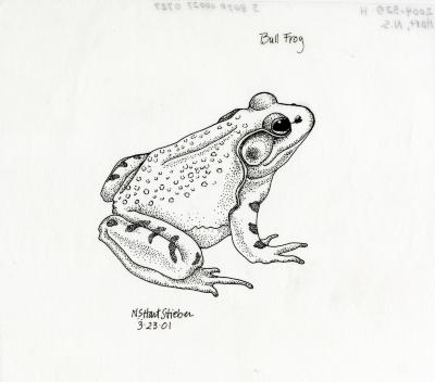 Animals and birds: Bull frog