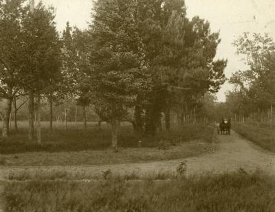Woman and man riding in carriage along Arbor Lodge lawn, east view