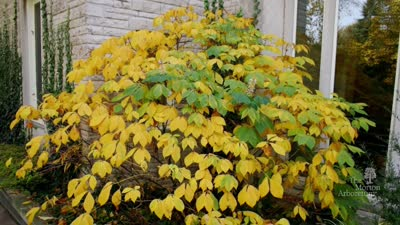 Plant Clinic tip: 5 Great Shrubs for Fall Color