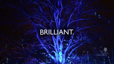 Illumination, Winter 2017-2018, medallion promo