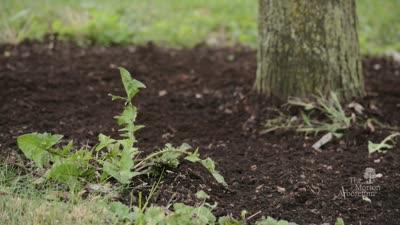 Plant Clinic: Mulching
