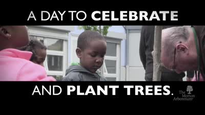 What Is Arbor Day?