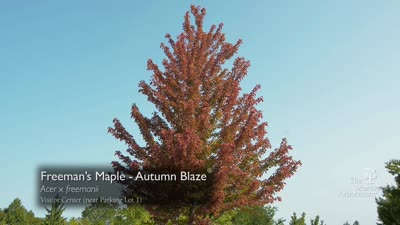 Fall Color Report, Highlights, September 15-21, 2017