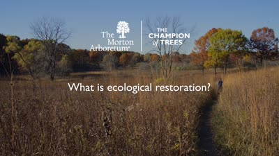 Woodland Stewardship Program, What Is Ecological Restoration, online ad, PHTV