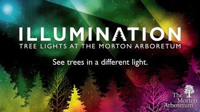 Illumination, Treemagination