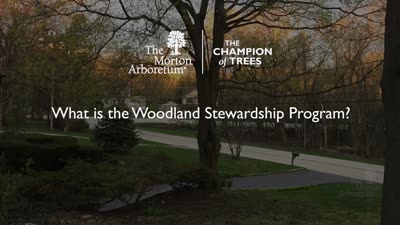 Woodland Stewardship Program, What Is The Woodland Stewardship Program, online ad, PHTV