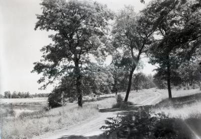 Arboretum  unpaved road alongside body of water on left