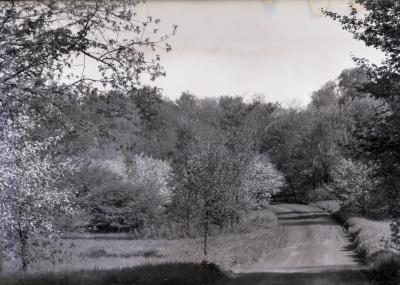 Forest Road curving to left at Crabapple Hollow in spring