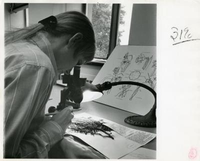 Nancy Hart viewing Herbarium specimen through microscope