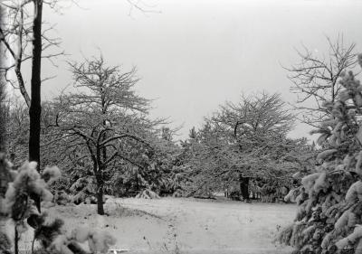 Forest Road with snow-covered trees