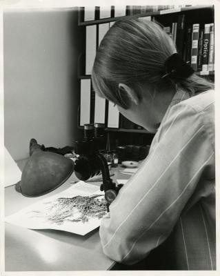 Nancy Hart working at desk with Herbarium specimen