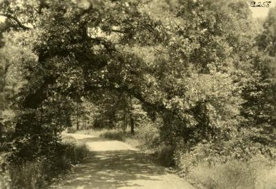 O.C. Simonds landscape along a west side road in the Arboretum