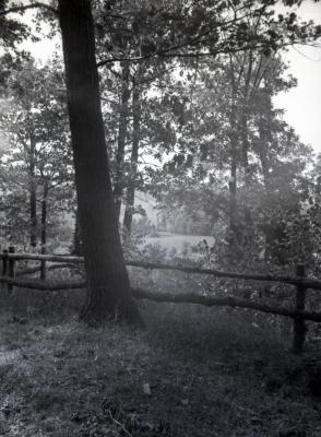 Ridge Road lookout looking west/northwest with tree in front of railing