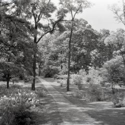 Joy Path, south of Thornhill residence