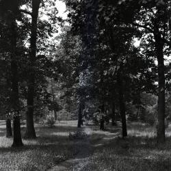 Joy Path through grass in Sargents Glade