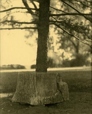 Arbor Lodge album: tree rising out of commemorative tree stump shaped stone inscription