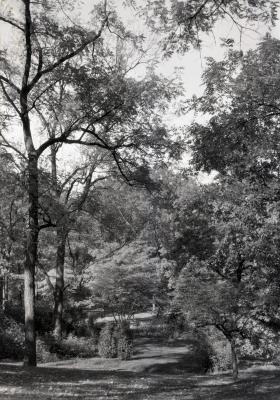 Area of trees near Joy Path