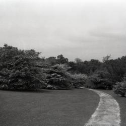 Joy Path through native hawthorns