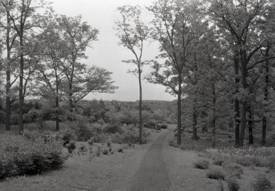 Joy Path, early spring