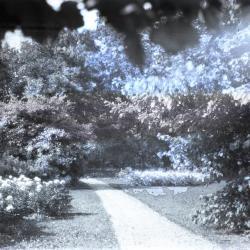 Joy Path alongside peonies