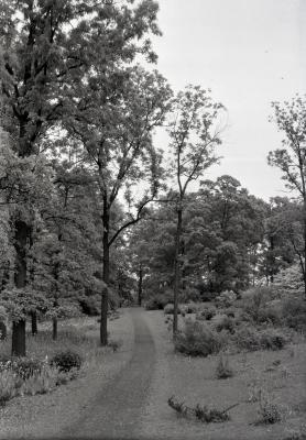 Joy Path with two tall trees along path opposite each other