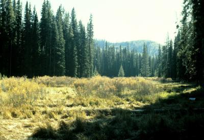 Betula glandulosa (Western Bog Birch), habitat
