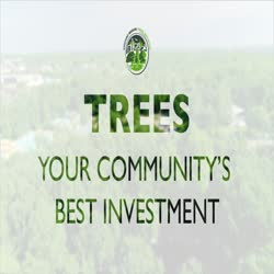 Chicago Region Trees Initiative: TREES, Your Community's Best Investment