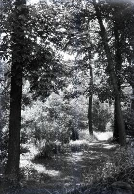 Trail in summer near Thornhill residence, west side