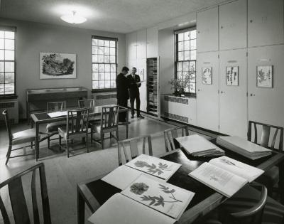 Herbarium, two men viewing specimens from cabinet