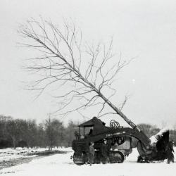 Workers moving tree in winter when Route 53 widened using Kluckhohn company tree mover