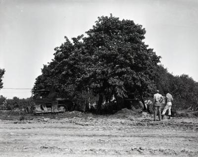 Two men observing transplanting of maple tree near shops at South Farm