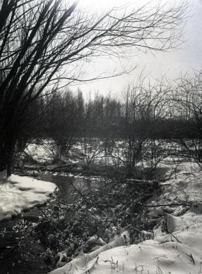 Looking north along stream in winter