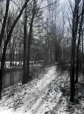 East side DuPage River path in winter looking north
