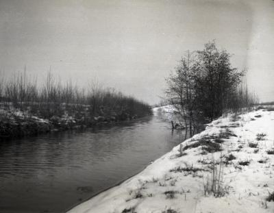 Poplar and willow plantings in winter along DuPage River