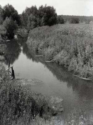 DuPage River looking west near Tilia Collection