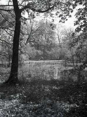 Water view through trees with road in background