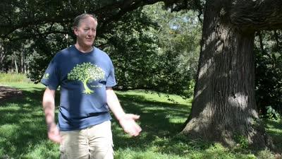 Great Trees Trail: Bur Oak