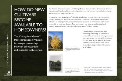 Gateway to Tree Science Interpretation Panel, Cultivating Resilient Trees