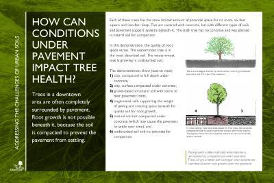 Gateway to Tree Science Interpretation Panel, Addressing the Challenges of Urban Soils