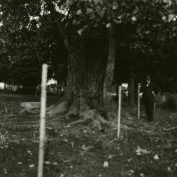 Joy Morton standing by large cottonwood on Warrenville Road