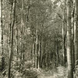 A chipped trail along Crabapple Lake with interpretation