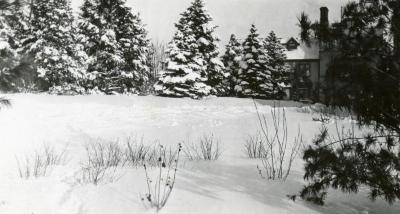 Morton Residence at Thornhill, evergreens east of house