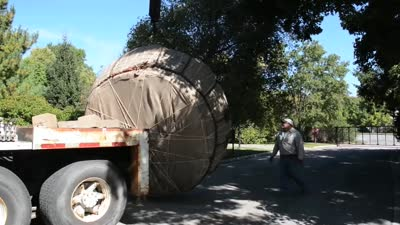 Elm Tree Transplant