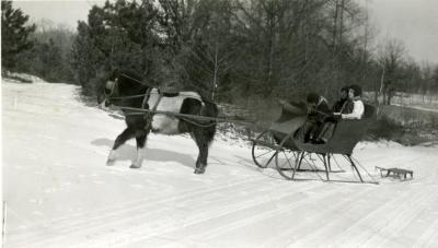 Clarence E. Godshalk's children getting pulled in a sleigh by their pony in the snow