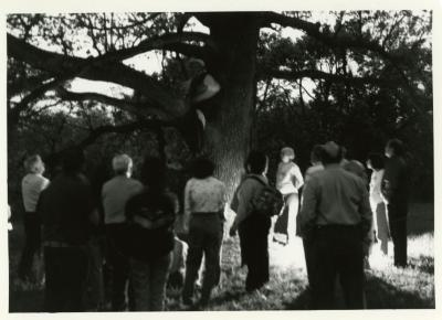 Twilight Tree Walk, Craig Johnson dressed as Joy Morton in a white oak