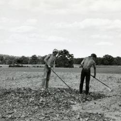 Men hoeing ground to plant prairie