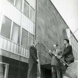 Tree planting at new Morton Salt Building, 110 N. Wacker, outside with shovel and balled tree